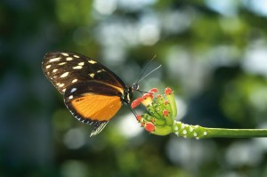 butterflye-on-flower
